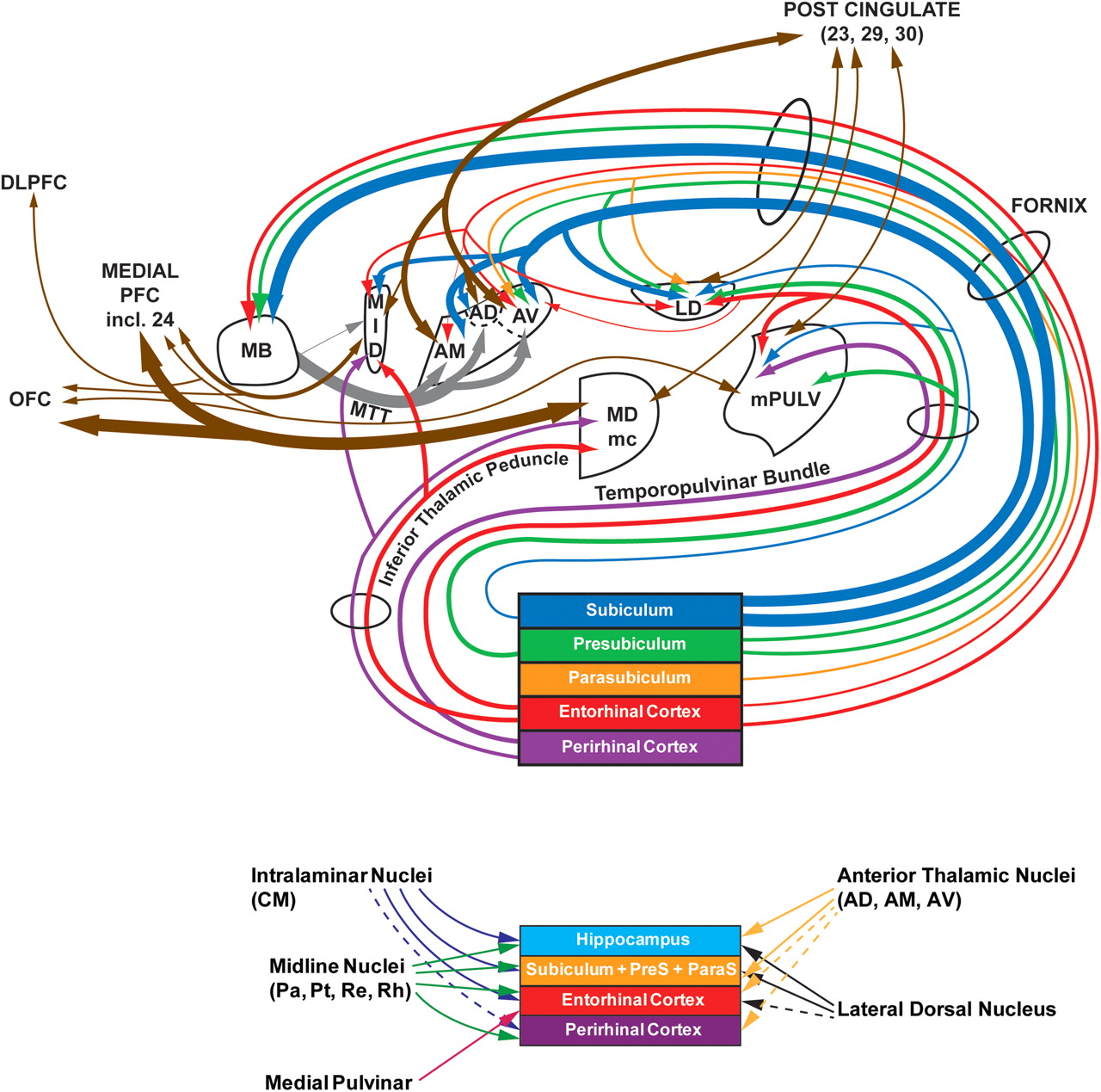 Unraveling the contributions of the diencephalon to recognition ...